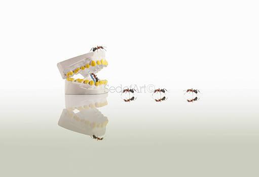 mini dentists