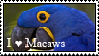 I love macaws by Fritzz88