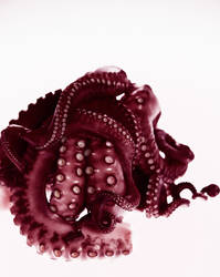 Octopus Alternate by SnuggliePuff
