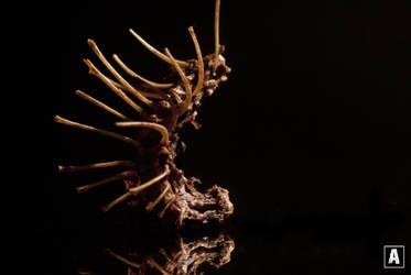 Centipede by SnuggliePuff