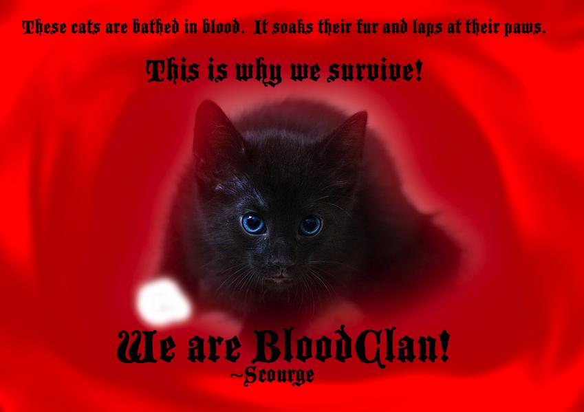 Scourge Warrior Cats Quotes Quotesgram