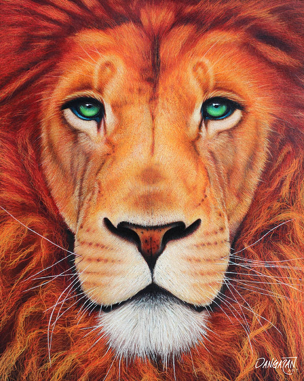 Lion by dangaranart