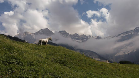 White Horse in the mountains by JuicyLung