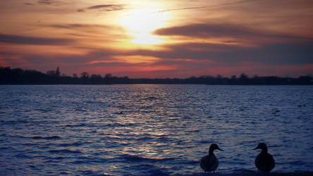 Ducky Sunset by JuicyLung