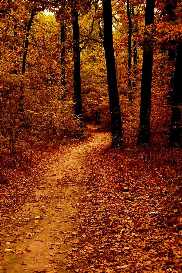 Autumn Path by JordanRobin