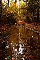 ... Autumn by JordanRobin