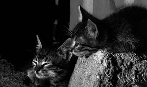 Cats by JordanRobin