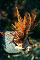 Pieces of Autumn by JordanRobin