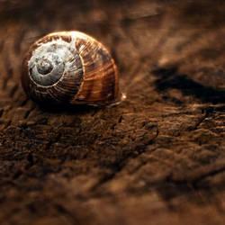 A simple Shell - Home by JordanRobin