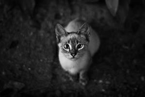 Curios by JordanRobin
