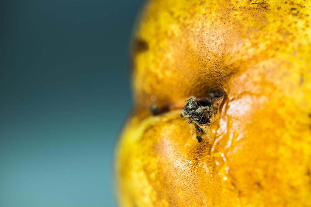 Pear by JordanRobin