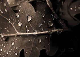 Morning dew by JordanRobin
