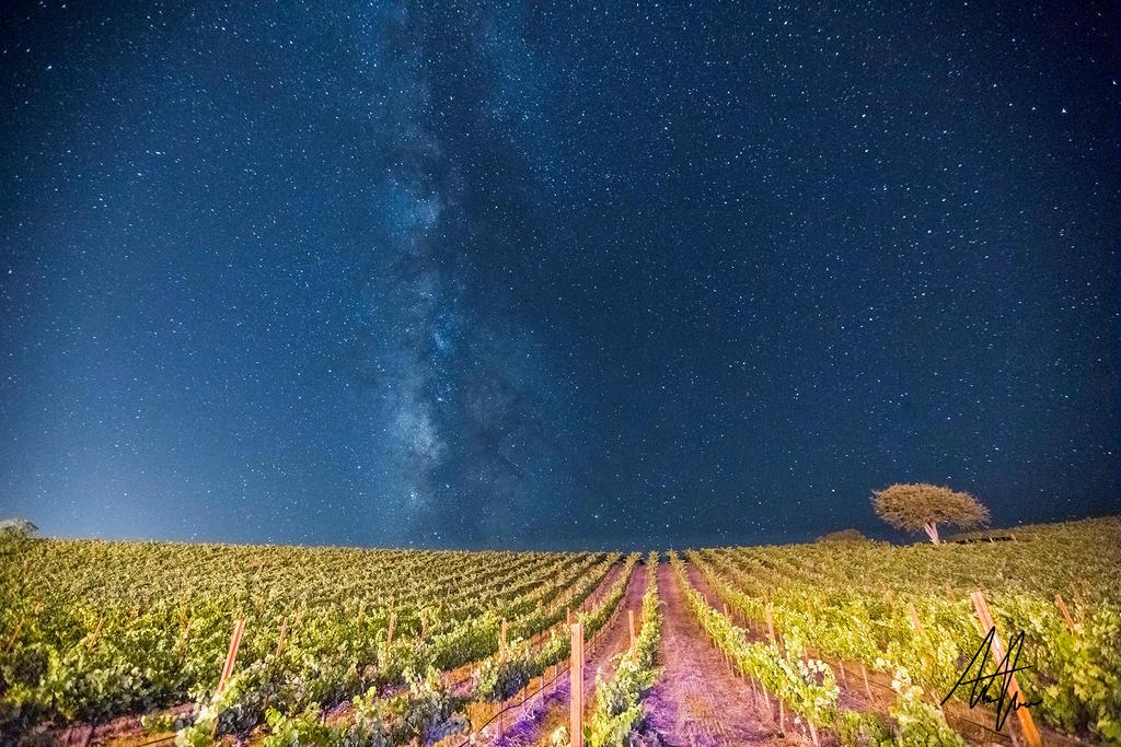 Milky Way Over the Vineyard