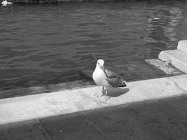 Bird 2 by paolaquasar