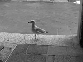 Bird 3 by paolaquasar