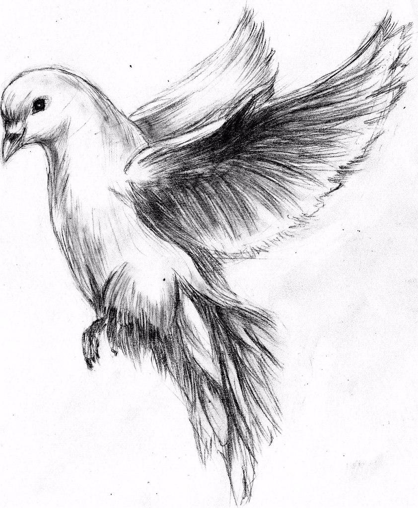Quick Sketch Of Dove By MaXymuSFM On DeviantArt