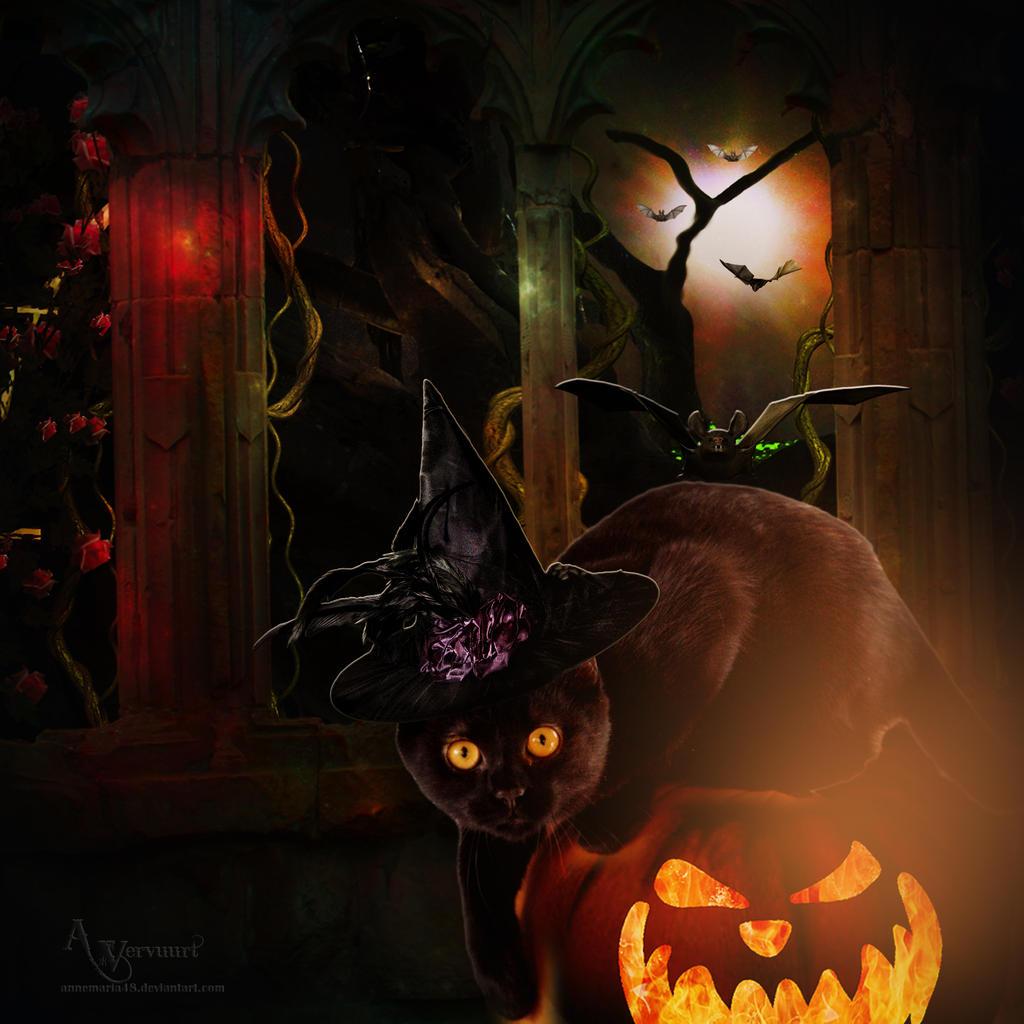 the Cat halloween 2019
