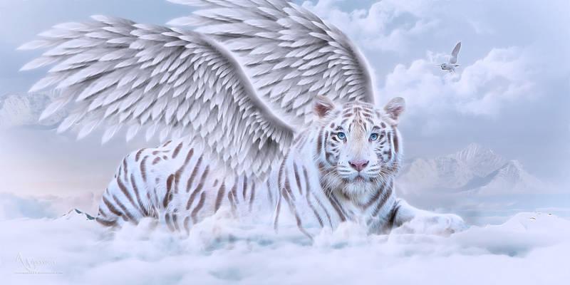 Tiger angell
