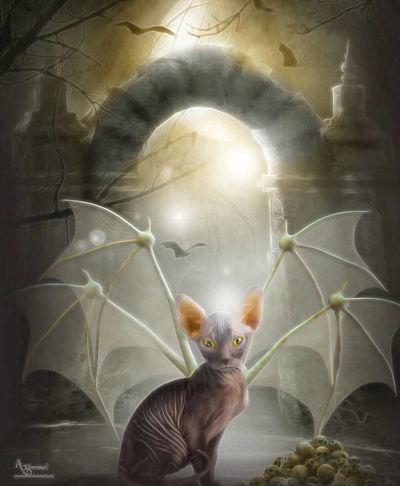 Cat bat bat