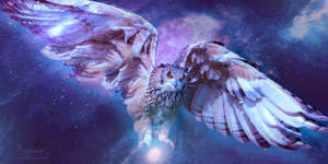 The owl space