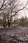 Snowy Amsterdamse Bos