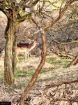 Deer park in Zandvoort