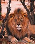 Lion 2021 live at instragram