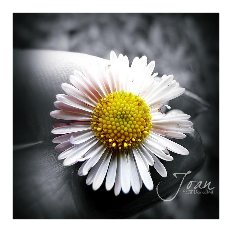 Simplicity of Life. Daisy by JDaVanim