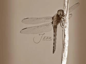 Dragonfly by JDaVanim