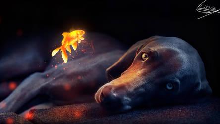 Dog by MarkVillaBz