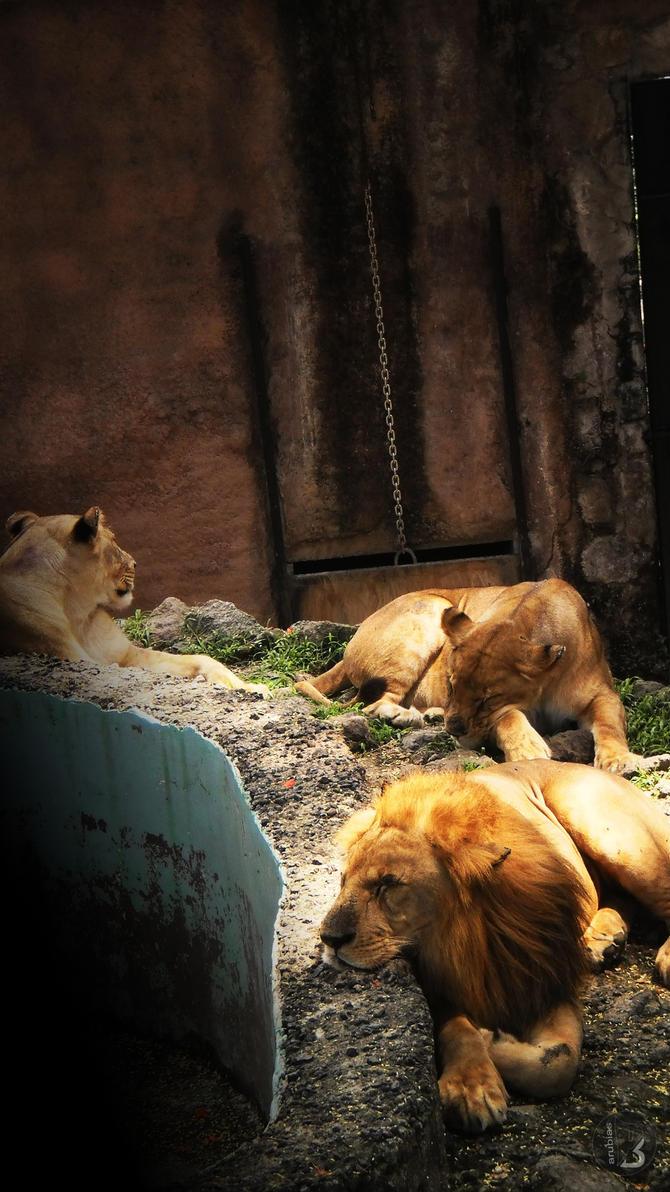 life of leon 2 by rady0123