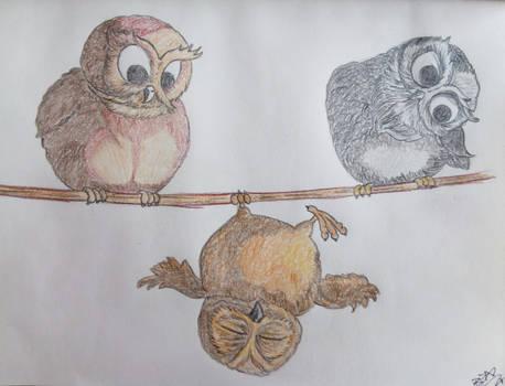 Tiny Owls :)