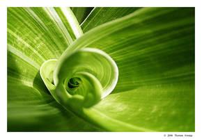 green swirl by PhantomPorks