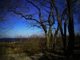 Trees by Evanrinya