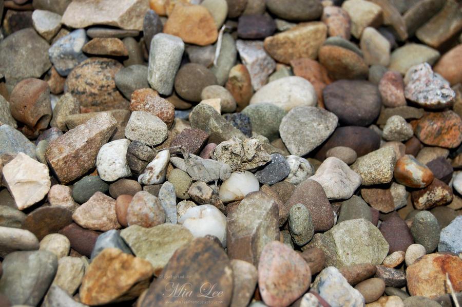 Rock grasshopper by MiaLeePhotography