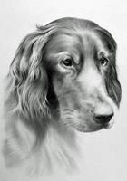 Dog by CubistPanther