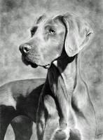 Doggy by CubistPanther