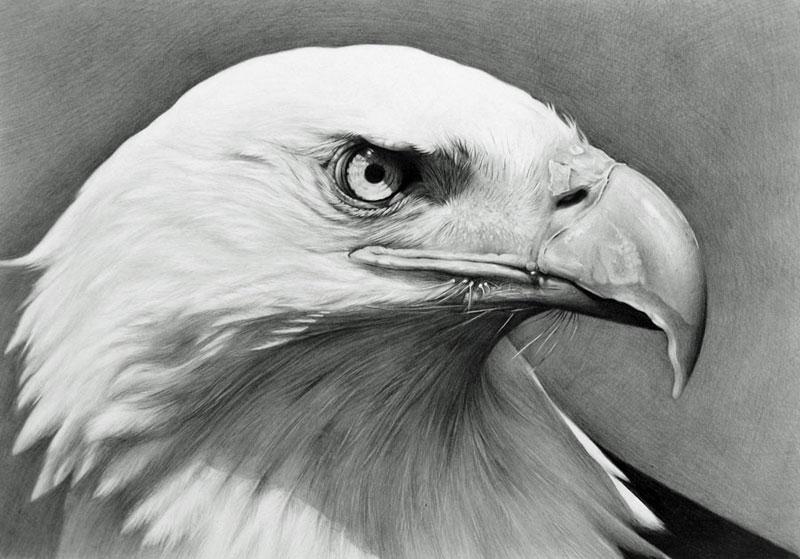 bald eagle by cubistpanther on deviantart