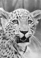 Baby Leopard by CubistPanther