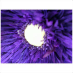 Purple Bliss by x-Rainayy-xx