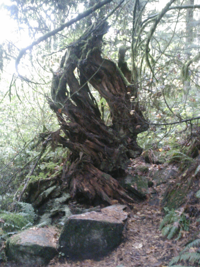 Photography: Uprooted by Crevist