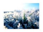 Winter is upon us III