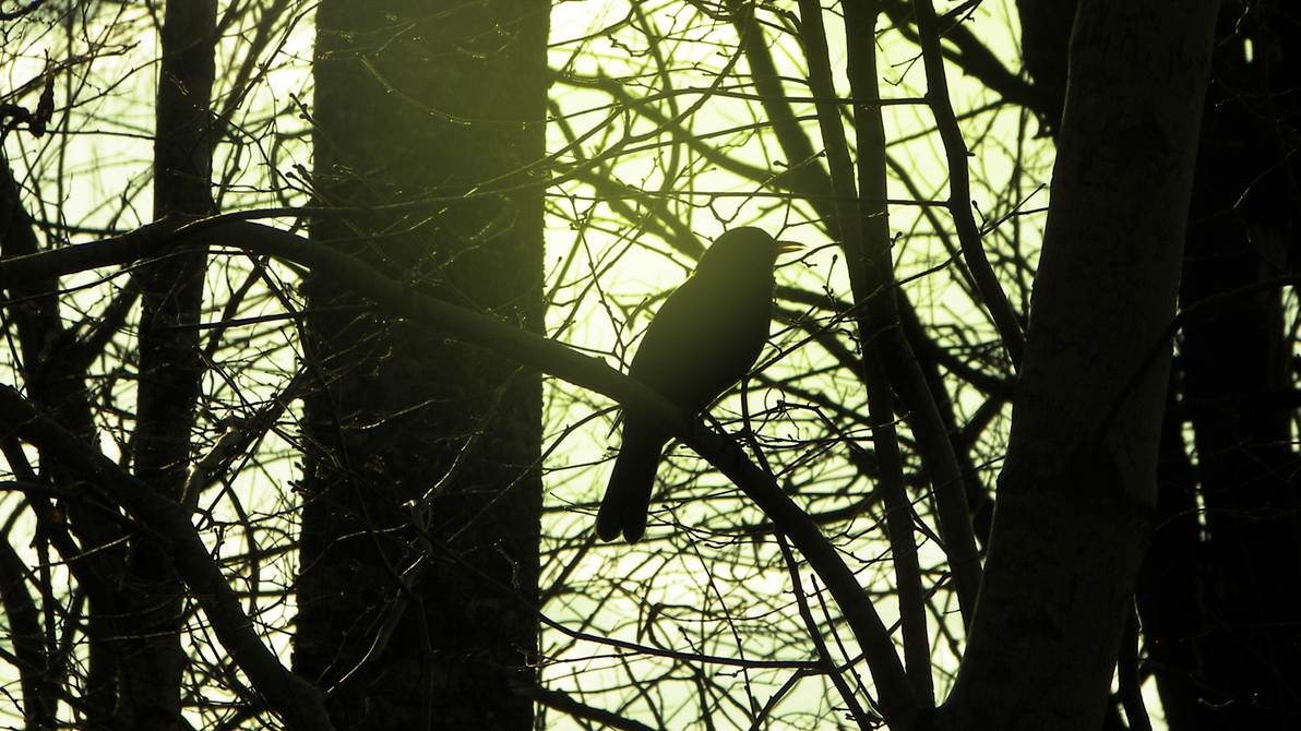 Bird Silhouette by RockLou