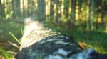 Fallen Log
