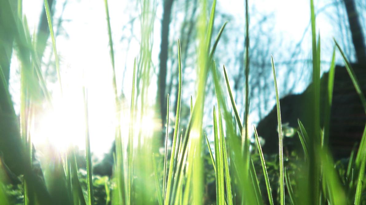 Sunlit grass by RockLou