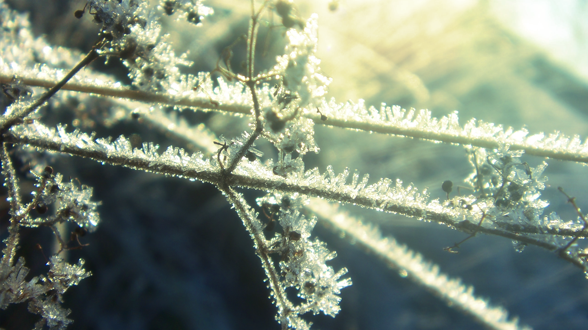 Winter Frost II by RockLou