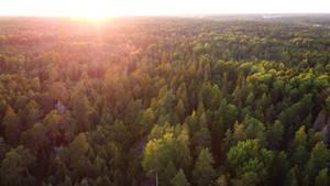 Sunset forest (4K resolution)