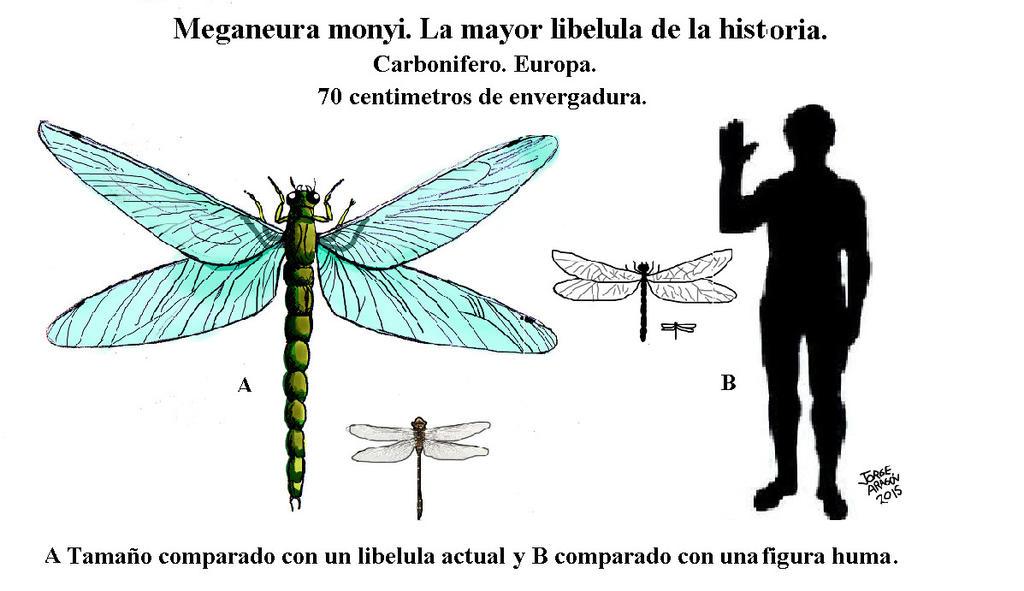 Interpretando la Biblia - Página 3 Meganeura_monyi_by_jorgearagon-d8j32y4