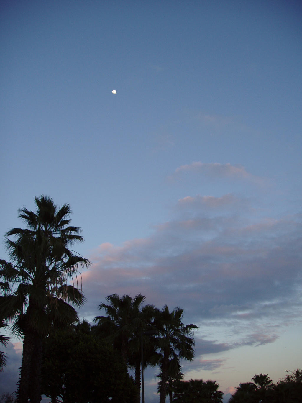 Evening sky with plam trees by Elliesmeria