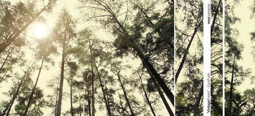 :: Vintage Forest ::